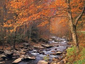 autumn_brook